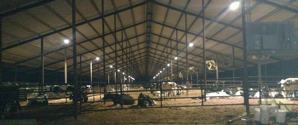 Dairy Farm Central Valley Ca